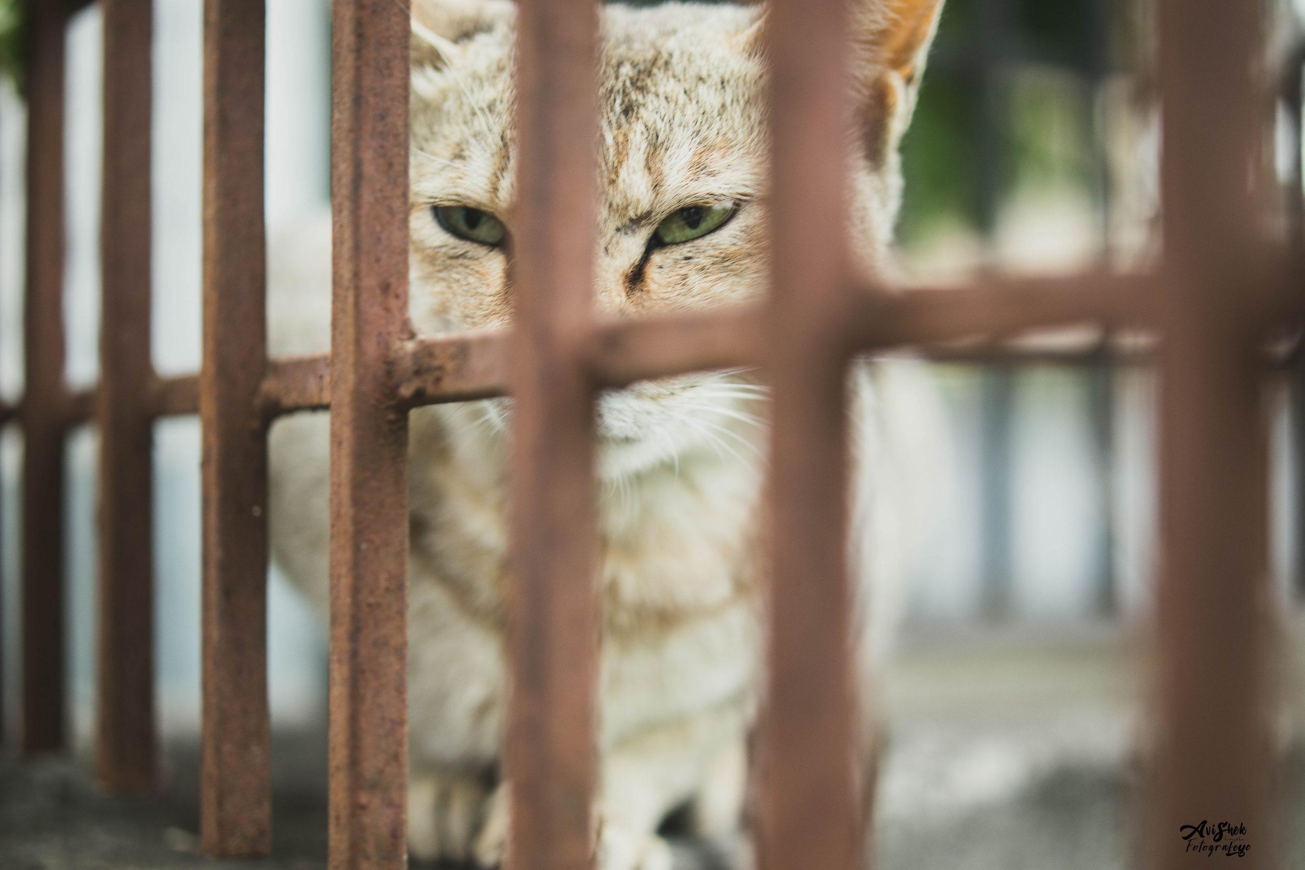 Lockdown cat